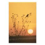 Sunset at Tewaukon National Wildlife Refuge Photo