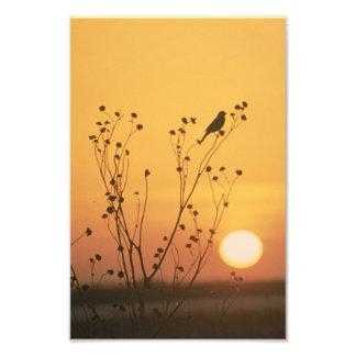 Sunset at Tewaukon National Wildlife Refuge Photo Print