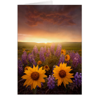 Sunset Daisies Note Card