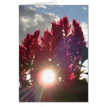 Sunset Flame Flowers - vertical (v2) Note Card
