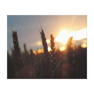 Sunset Harvest Canvas Print
