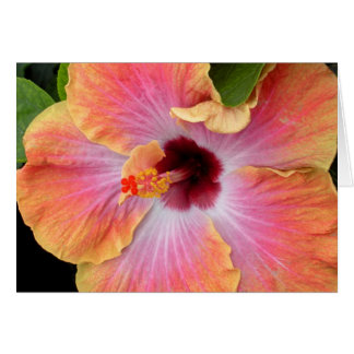 Sunset Hibiscus Card