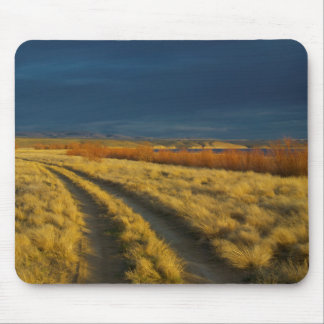 Sunset highlights the red bark of bushes mouse mat