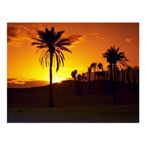 Sunset in the desert, The Sahara, Tunisia Desert Post Cards