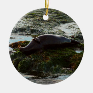 Sunset Lit Harbor Seal II at San Diego Christmas Ornament
