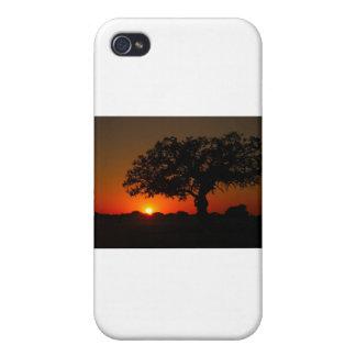 Sunset Live Oak iPhone 4 Covers