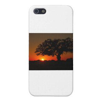 Sunset Live Oak iPhone 5 Covers