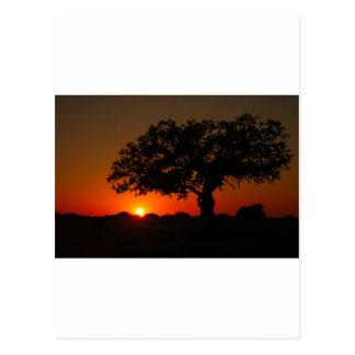 Sunset Live Oak Postcard