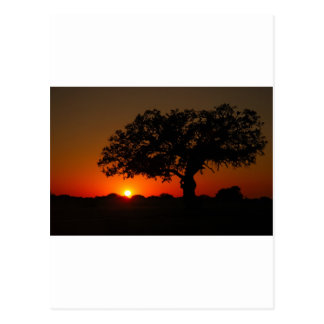 Sunset Live Oak Postcards