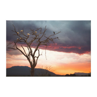 Sunset On Kandheri Swamp With African Spoonbills Canvas Print