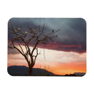 Sunset On Kandheri Swamp With African Spoonbills Rectangular Photo Magnet