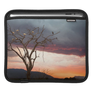 Sunset On Kandheri Swamp With African Spoonbills Sleeves For iPads