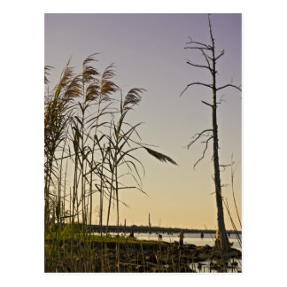 Sunset on Louisiana Swamp Post Card