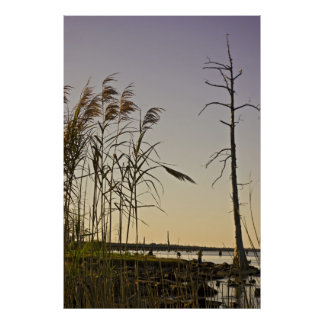 Sunset on Louisiana Swamps Poster