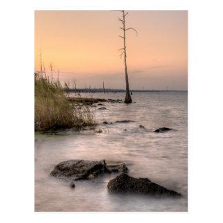 Sunset on Louisiana's Swamps Postcard
