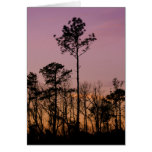 Sunset On The Bayou Purple Fine Art Greeting Card