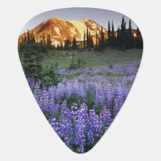 Sunset over Mt. Adams and a sub-alpine meadow Guitar Pick
