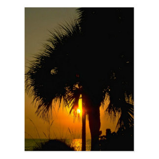 Sunset Over Palm Trees Postcard