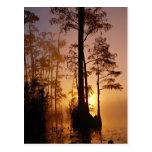 Sunset over the Okefenokee Swamp in Georgia Postcard