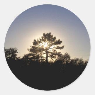 Sunset Pine Classic Round Sticker