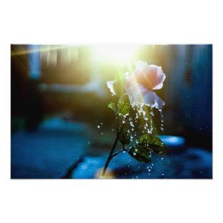 Sunset Splash Pink Rose Art Photo