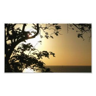 Sunset Through Trees Photo Print