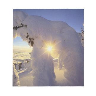 Sunset thru the Snowghosts at Big Mountain near Notepad