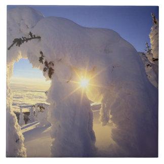 Sunset thru the Snowghosts at Big Mountain near Tile
