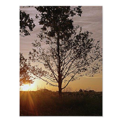 Sunset Tree Photo
