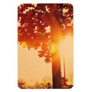 Sunset tree rectangular photo magnet