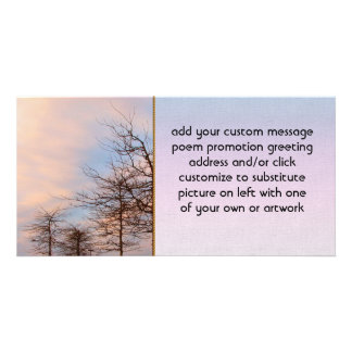 Sunset Trees In Winter Photo Cards