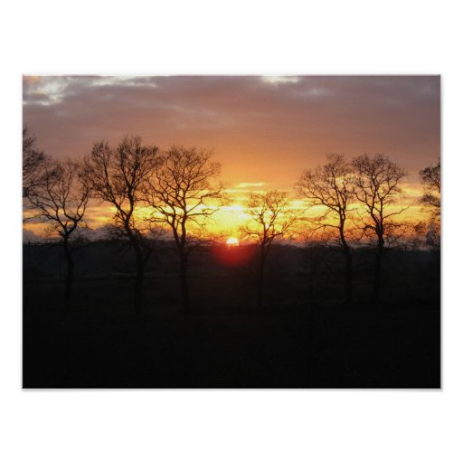 Sunset Trees Photo Poster