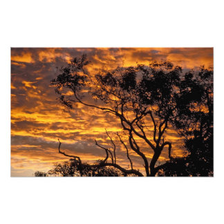 Sunset, Uluru-Kata Tjuta National Park, Photo Print