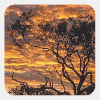 Sunset, Uluru-Kata Tjuta National Park, Square Sticker