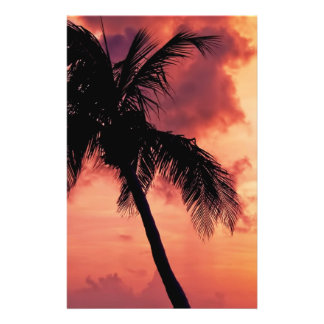 Sunset with Palm Full Color Flyer