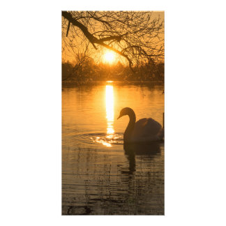 Sunset with Swan Photo Cards