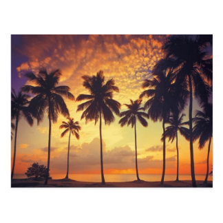 Sunsetpalm Postcard