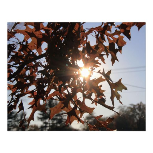 Sunshine and Leaves Photograph