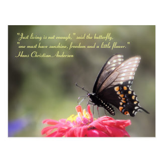 Sunshine Freedom Flower Butterfly Quote Post Cards