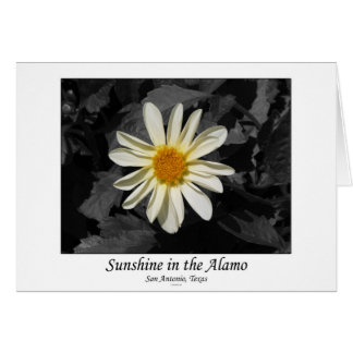 Sunshine in the Alamo (San Antonio, Texas) Greeting Card