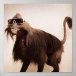 sunshine monkey