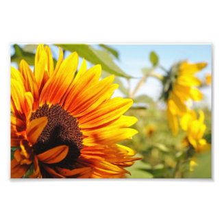Sunshine Photo Art