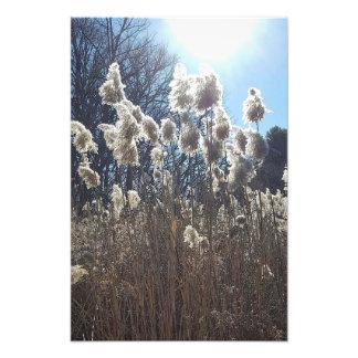 Sunshine Photo Print