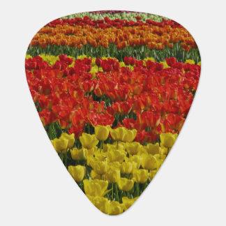 Sunshine Rainbow Tulips Plectrum