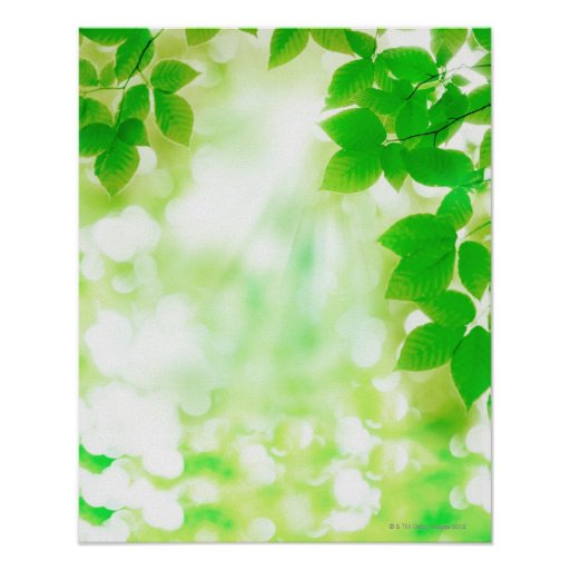 Sunshine through leaves, close-up poster
