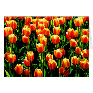 Sunshine Tulips Note Card