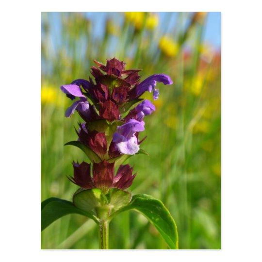 Sunshiny day - lila flower postcard