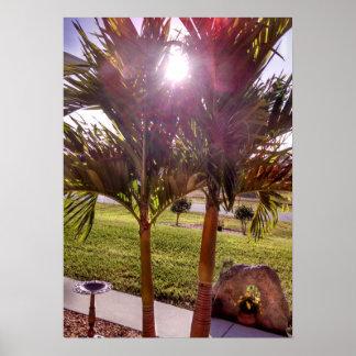 Sunstar sunburst Palm trees Birdbath Poster