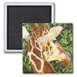 Sunstruck- Giraffe Magnet