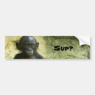 Sup? DArcy Evans Photo Bumper Sticker